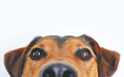 De huisdierenclausule
