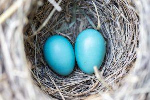 Het regelen van juridische zaken bij de geboorte